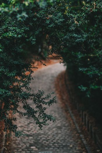High angle view of footpath amidst trees in forest