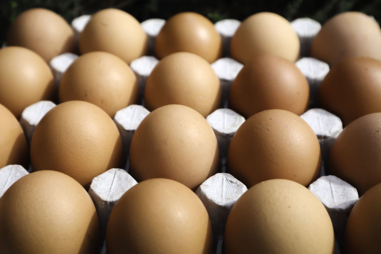 Close-up of eggs in row
