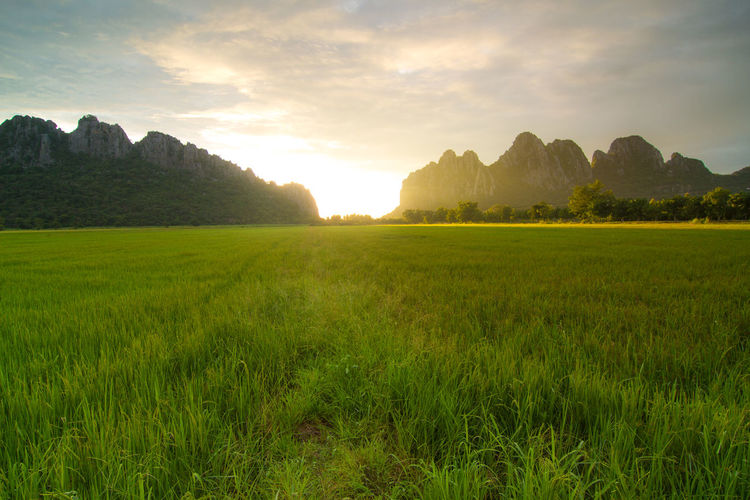 Aerial View of Green Rice Field in Nakhonphanom Thailand at Sunset. Plant Sky Scenics - Nature Beauty In Nature Tranquility Tranquil Scene Grass Landscape Environment Green Color Land Field Mountain Nature Cloud - Sky Growth Sunset No People Tree Rural Scene Outdoors