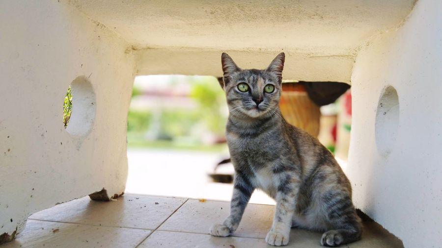 stray cat Pets