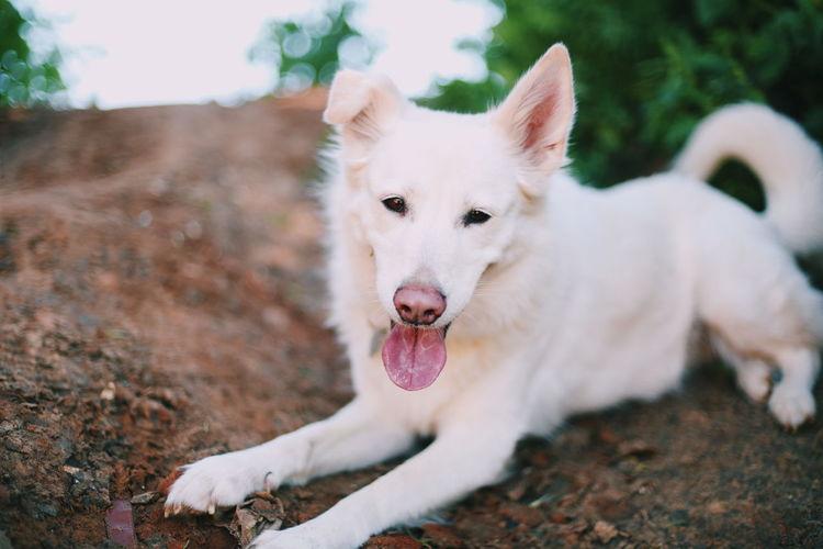 Portrait of white dog