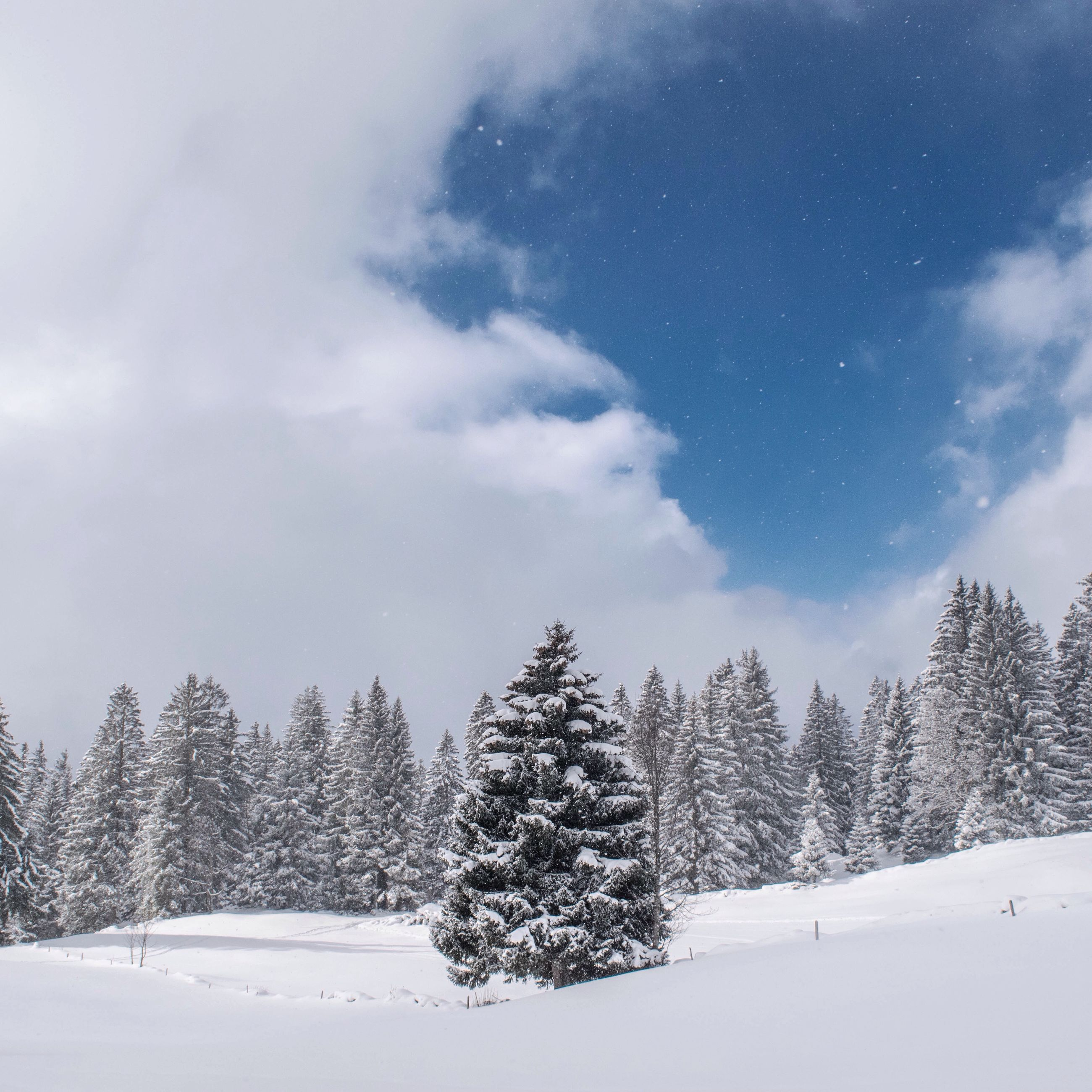 snow, winter, cold temperature, tree, season, weather, tranquility, sky, tranquil scene, nature, covering, beauty in nature, scenics, landscape, white color, cloud - sky, field, growth, covered, non-urban scene