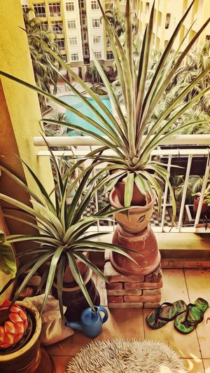 Ananas Pineapple Balkon Apartment Living... BeFunky Manga Malasia Asie Tropicalplants Tropisch HuaweiP9 Potted Plant Indoors  Growth No People Plant Built Structure Day Architecture Nature Close-up