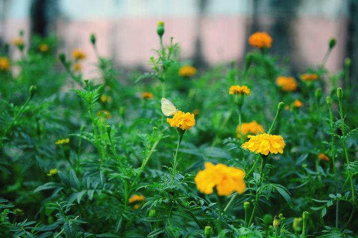 I see yellow flower on green grass. Lâu rồi mới đc xem phim do Việt Nam sản xuất hay vậy. Tôi Thấy Hoa Vàng Trên Cỏ Xanh Hanoi Wander