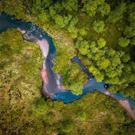 Top down Water Nature Green Color No People Plant Day Aerial View High Angle View Outdoors Algae Environment Beauty In Nature Moss Land Tree Lake Growth Pollution Directly Above Swamp