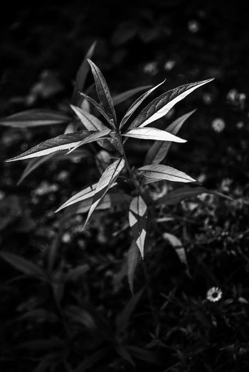BasqueCountry Black & White Contrast In A Walk Life Light And Shadow Nature Photography Plants And Flowers