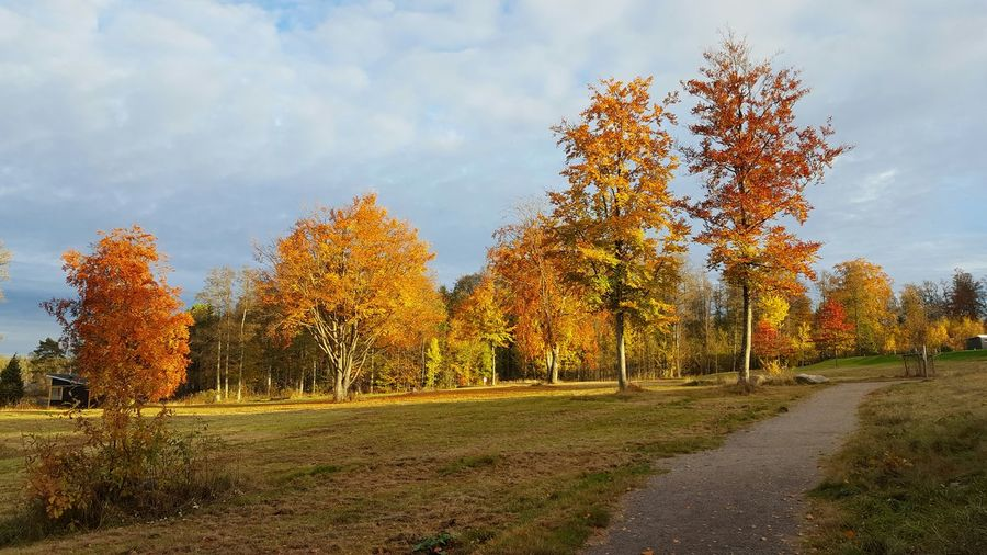 Autumn Autumn Colors Tree Growth Green Yellow Red Orange Water Leaves Nature No People Outdoors Majestic Beauty In Nature Colourful Calm Enjoying Life Relaxing Växjö  Sweden