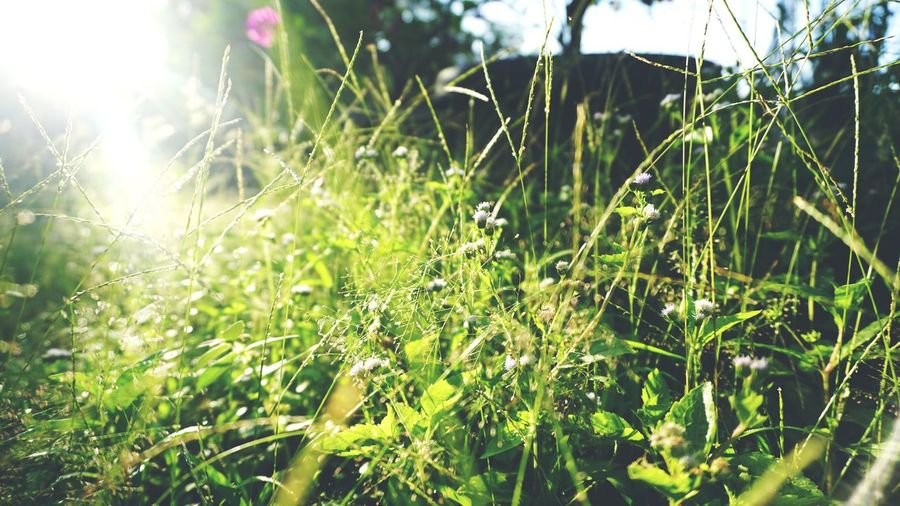Close-up of fresh green plants on field during sunny day