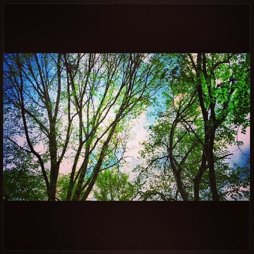 HAPPY FRIDAY USA_ TENNESSEE_ LEBANON_ Home_sweet_home SPRING_ Nature_ BLUESKY_ CLOUDSPACE _GREENERY_ Trees