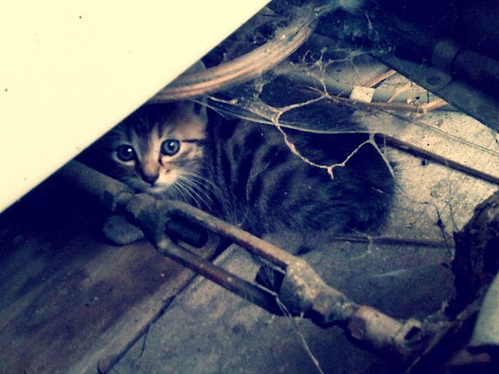 Baby Cat♡ Cat♡