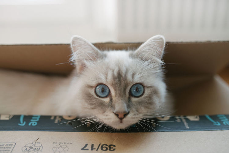 Close-up portrait of cat in box at home