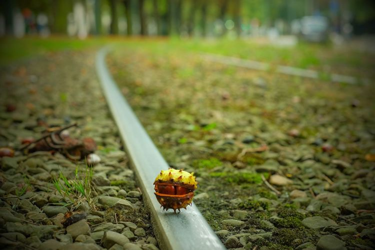 That bonker of a conker Beauty In Nature BabelFishEye Babelfish Conkers Chestnut Fall Fall Beauty Autumn Autumn Colors Eye4photography  Nature On Your Doorstep Urban Nature Tram Tracks Perspective Personal Perspective Gimme A Smile Autumn Mood