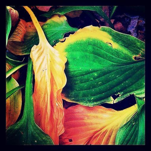 Full frame shot of multi colored flower