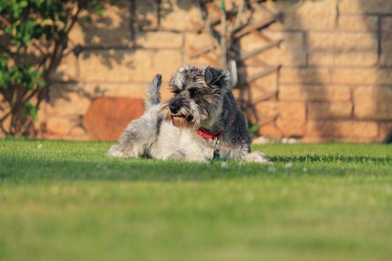 Surface Level Shot Of Dog