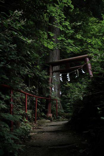 一人の時間を楽しむ Photography Japan 西目屋