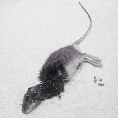 It's a cat eat mouse world.