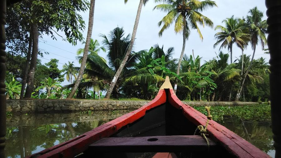 Boat In River Against Palm Trees On Field