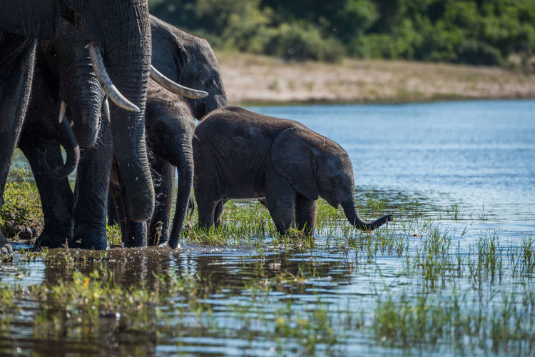 Animal family at waterhole in forest