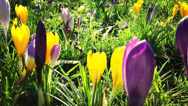 spring is sprouting. Flowers Boost Filter Amsterdam Eye Em Nature Lover