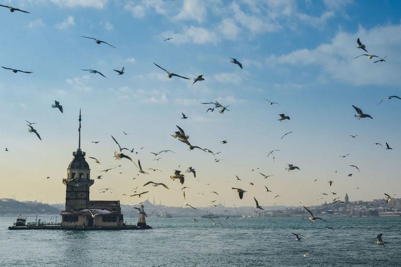 Flock of birds flying over sea