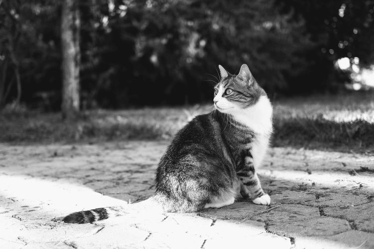 Pets Feline Domestic Cat Sitting Portrait Cat At Home Animal Eye
