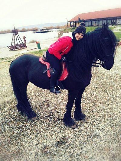 Friesian Horse Equestrian That's Me Horsebackriding  Loveit
