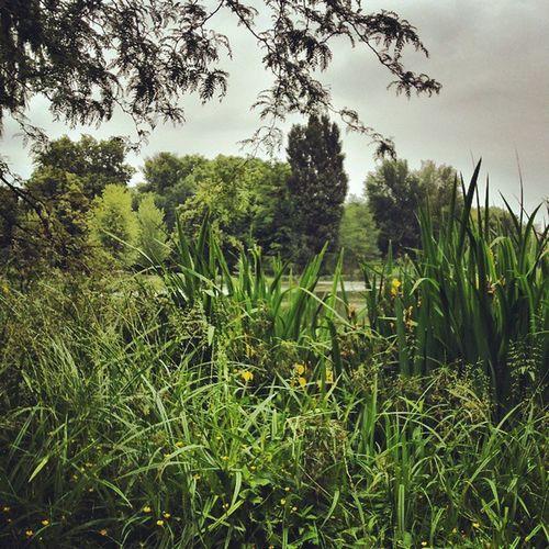 Wiese  Meadow See Lake Lietzensee Berlin Blümchen  Floral Gräser Grasses Landscape Landschaft Natur Nature