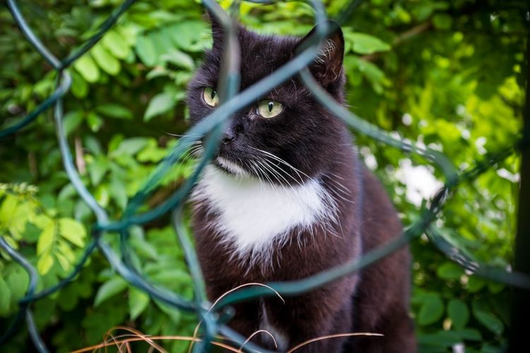 Cat Feline Pet Animal Nature Housecat Look Eyes Concentration Black Cat Katze German Germany Bamberg  Bayern Bavaria Michaelsberg