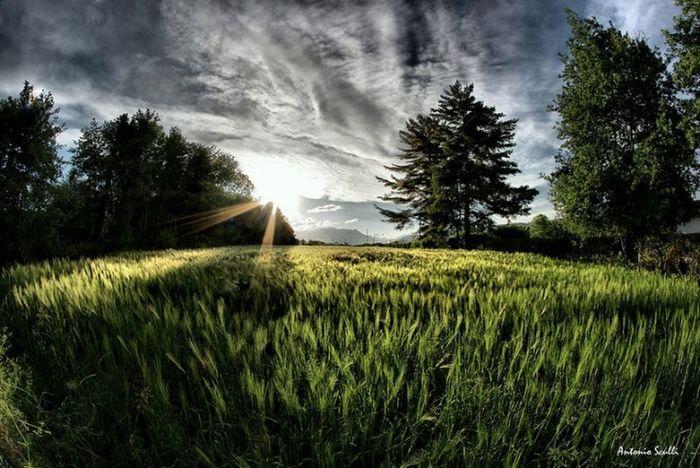 La vita è questo, una scheggia di luce che finisce nella notte. Louis-Ferdinand Céline Samsung SamsungNX500 Italy Italia Landscape Sole Soleil Sun Agriculture Tree Growth Field Crop  Nature Landscape