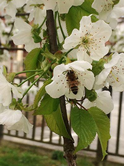 Soddisfatto..... Avvicinarmi alle api non è il mio forte