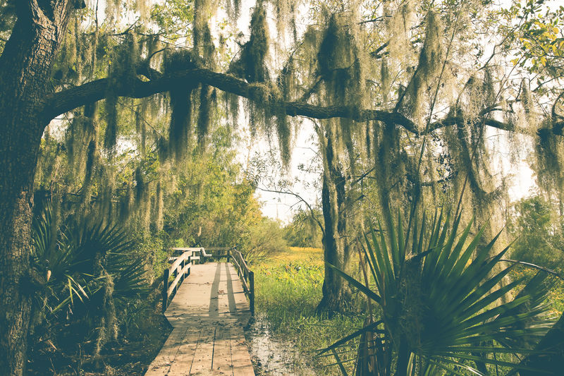 Spanish Moss Beauty In Nature Boardwalk Day Diminishing Perspective Footpath Forest Green Color Growth Jean Laffite Park Lifestyles Louisiana Nature Non-urban Scene Original Experiences Outdoors Park Scenics Spanish Moss Swamp The Way Forward Tranquil Scene Tranquility Tree Tree Trunk Walkway