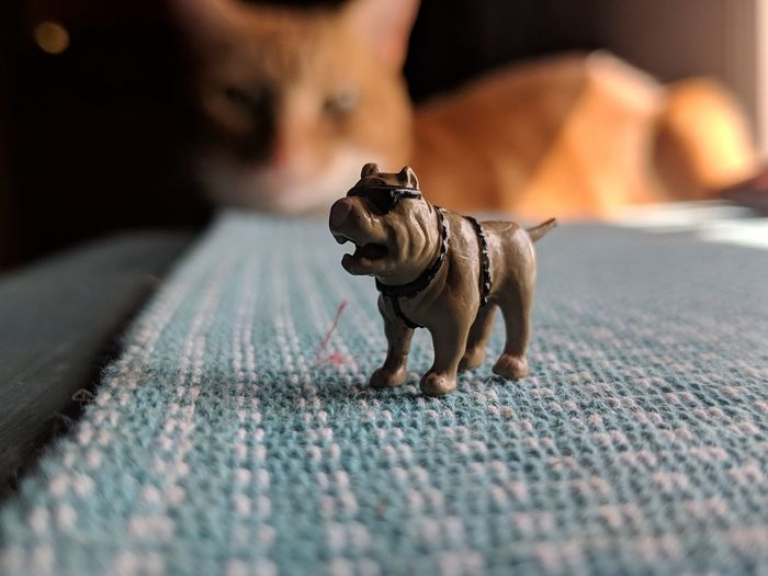 Close-up of a toy dog with cat looking in the background