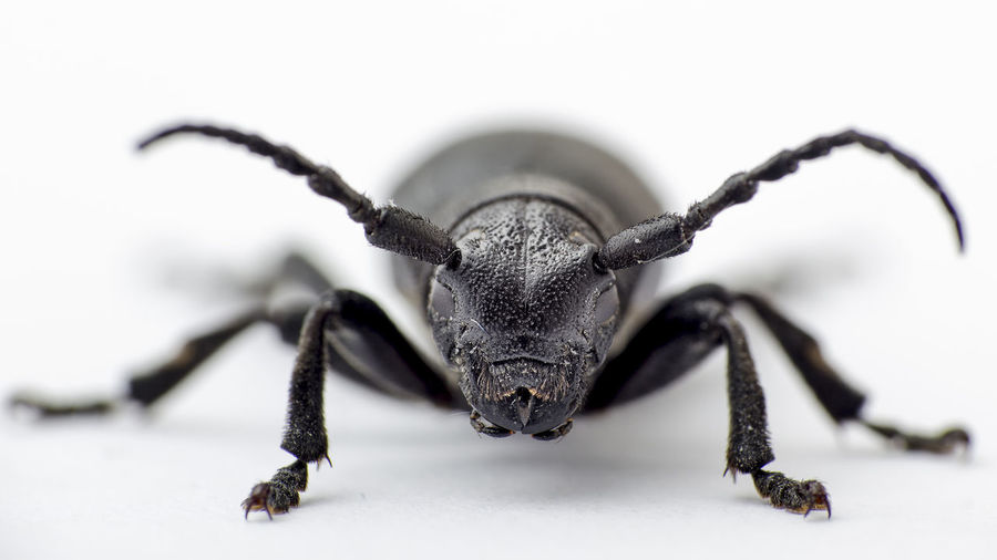 Close-up of beetle over white background
