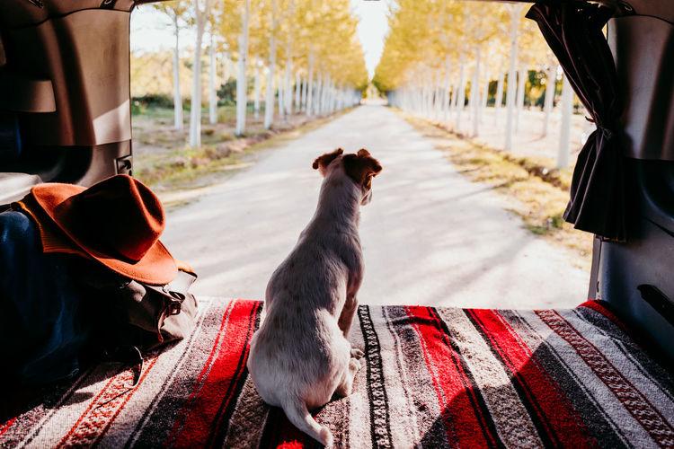 Dog sitting in van against trees