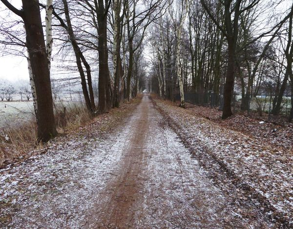 The Way Forward On My Way To Work Frosty ⛄ Bicycling Beauty In My Every Day Life Cold Outside ❄⛄  Wintertime ⛄ Enjoying The View Winter Hardy..i'm Not😄 Dreaming Of Spring Tranquility Tranquil Scene Outdoors No People For My Friends 😍😘🎁 Brrrrrrrrr❄❄❄❄ Plants In Winter Cold Outside ❄⛄  Beauty In Winter😍 Radlweg Coutry Life