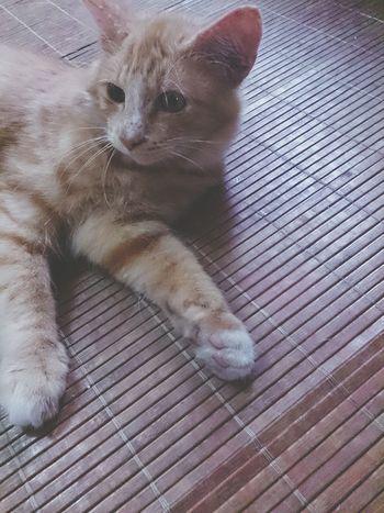Ilovemycat Enjoying Life