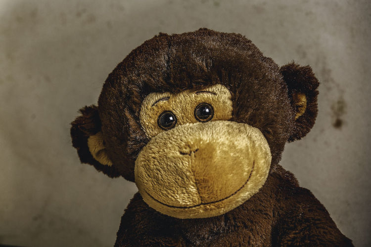 Close-up portrait of a stuffed toy