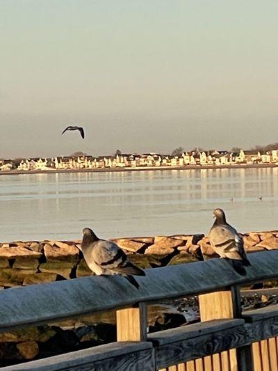 Seagulls perching on a sea