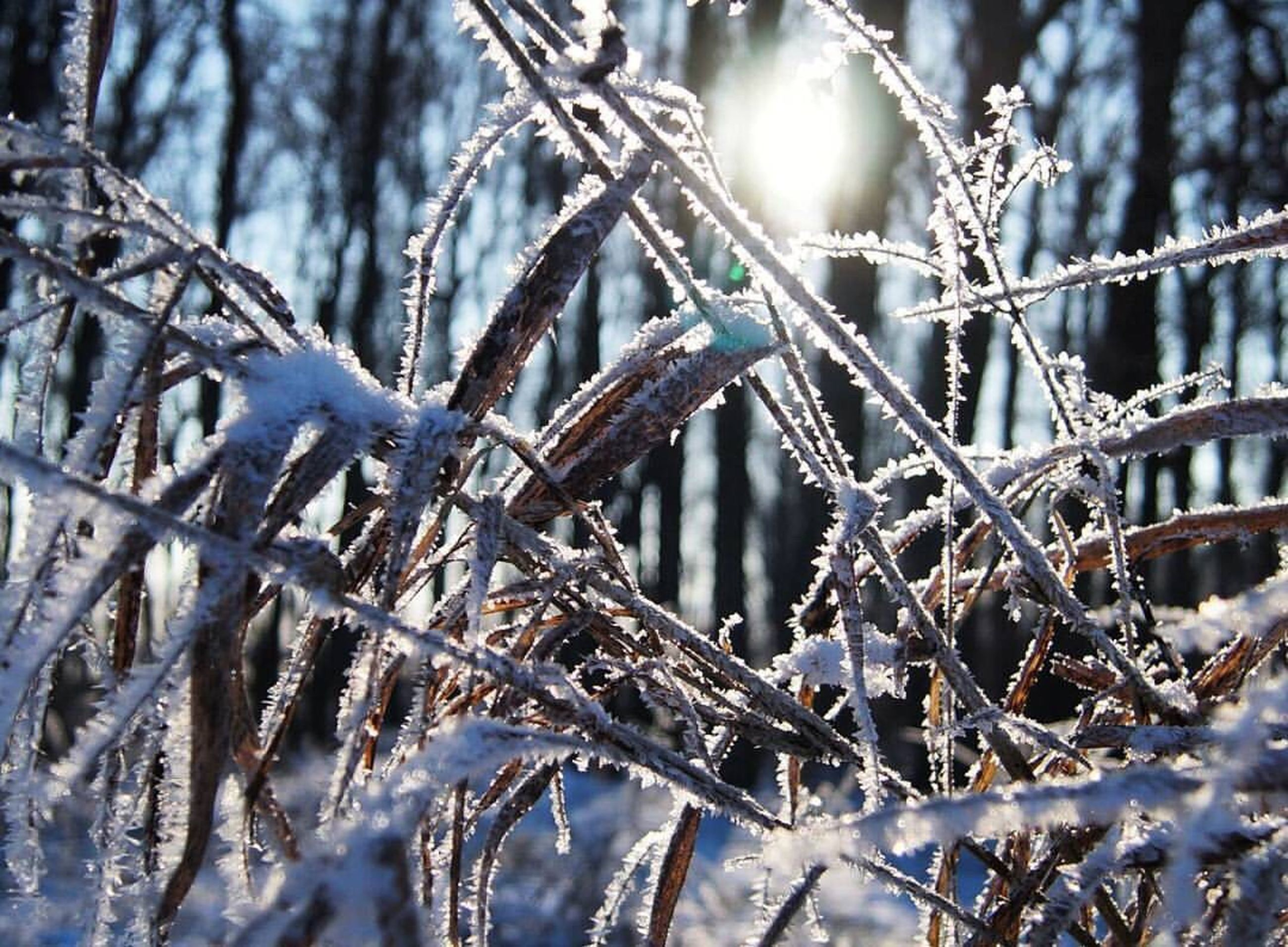 winter, snow, cold temperature, frozen, nature, tree, weather, day, no people, outdoors, beauty in nature, branch, close-up, forest, snowflake