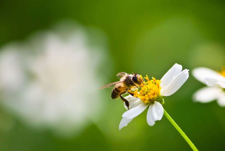 Bee on flower Flower Insect Animal Themes Animals In The Wild Fragility Petal Nature One Animal Beauty In Nature Freshness Plant Wildlife No People Outdoors Growth Bee Flower Head Focus On Foreground Day Animal Wildlife