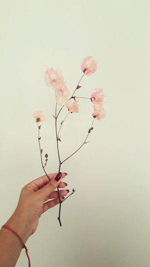Flawers Human Hand Pink Color Fragility Flower Love Nature Vintage Indie