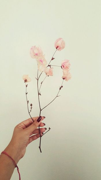 Flawers Human Hand Pink Color Fragility Flower Love Nature Vintage Indie