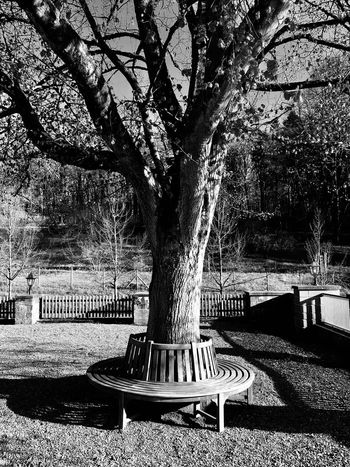 tree Day Architecture Tree Nature Sunlight Outdoors No People Plant