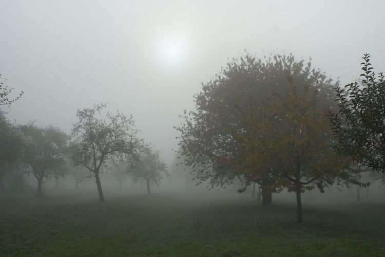 Tree Fog Plant Beauty In Nature Tranquility Tranquil Scene Land Sky Field Nature Environment Landscape Growth Grass Sun No People Non-urban Scene Scenics - Nature Idyllic Outdoors Hazy  Orchard Autumn Mood