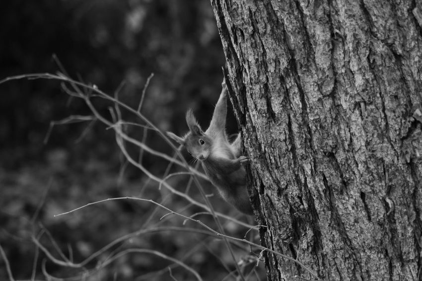 Squirrel Art Photgraphy On Tour Art Is Everywhere Things Around Me Art Photography Textured  Focus On Foreground Graveyard Tour Close-up Card Design Personal Perspective Animal Themes Animal Black And White Photography Pattern Animals In The Wild Day Outdoors While Walking Tree Tree Trunk Outdoors Photography Details Structure