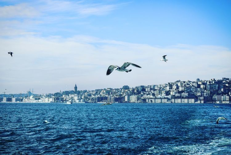 Seagulls flying over sea against buildings in city