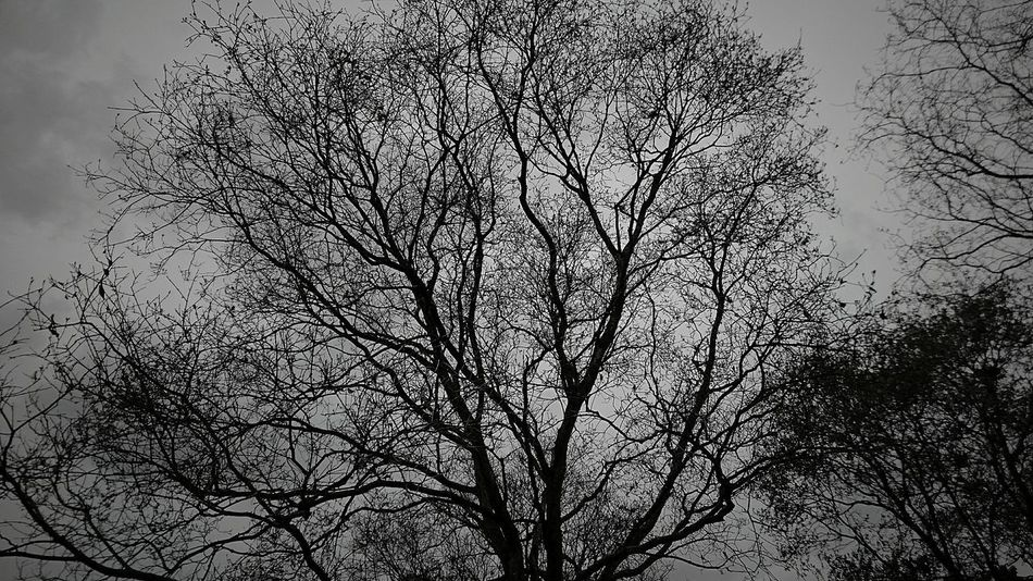"""""""Nothing on this earth is standing still. Its either growing or its dying. No matter if its a tree or a human being."""" ~Lou Holtz~ No People The Purist (no Edit, No Filter) Blackandwhite Black And White Bnw Outdoors Nature Still Life Nature Photography Backgrounds Close-up Sky Bare Tree Dried Plant Branch"""