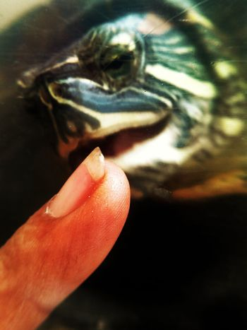 Playing With My Pet Eyeem Philippines Indulgence I ♥ Turtles