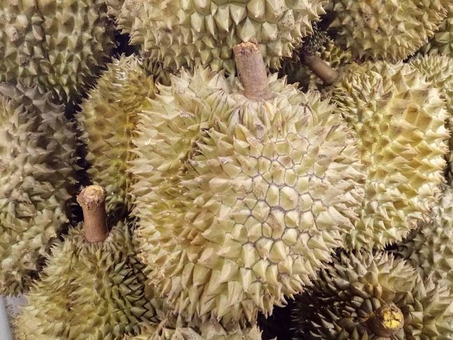 Durians Fruit Fruits No People Close-up Durian Durians