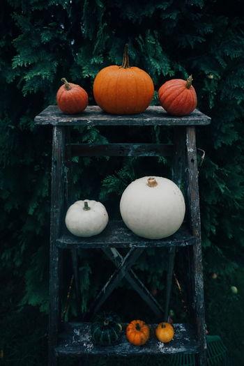 Pumpkins on wooden table in garden